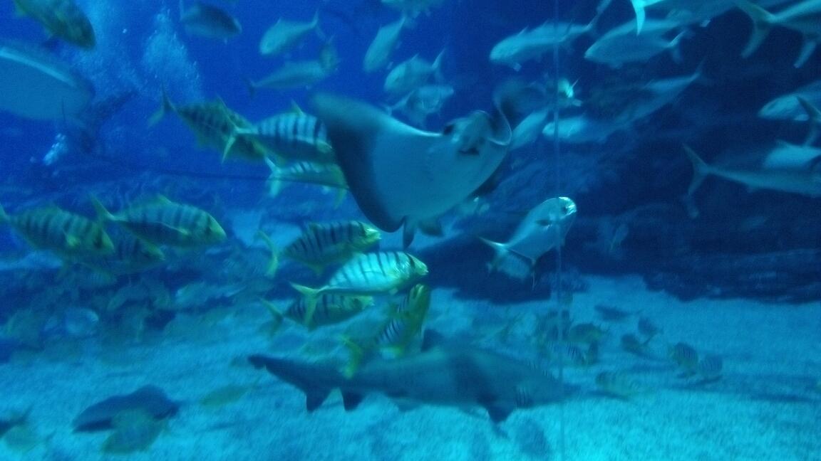 珠海横琴长隆海洋公园