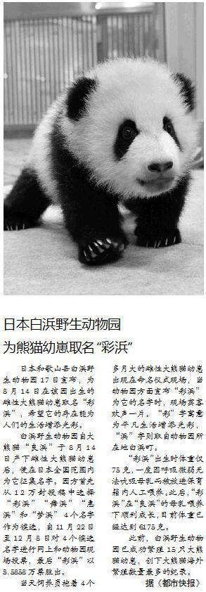 """日本白浜野生动物园为熊猫幼崽取名""""彩浜"""""""